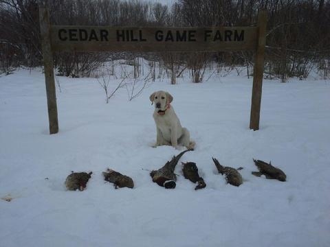 Hunting Photo Gallery | Cedar Hill Game Farm